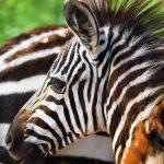 Creation Kingdom Zoo