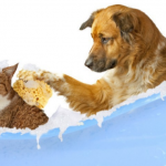 Scott Veterinary Services Inc., Gate City, VA 24251
